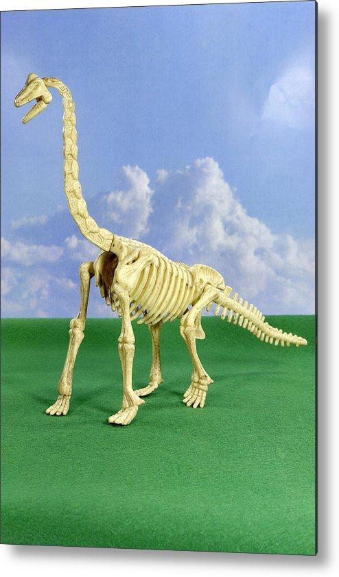 Brachiosaurus Metal Print featuring the photograph Brachiosaurus Dinosaur Skeleton by Friedrich Saurer