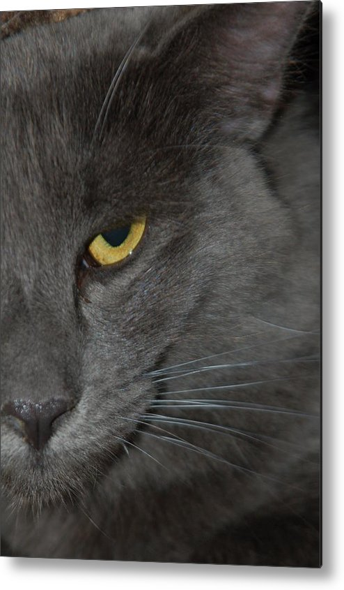 Cat Metal Print featuring the photograph Brubaker by Victoria Leyva