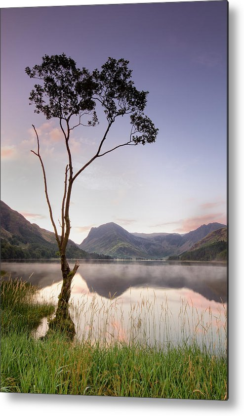 Vertical Metal Print featuring the photograph Buttermere Tree by Phil Buckle