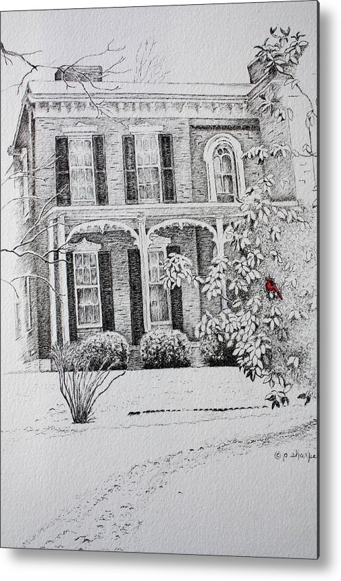 Historic Home Metal Print featuring the drawing Cardinal by Patsy Sharpe