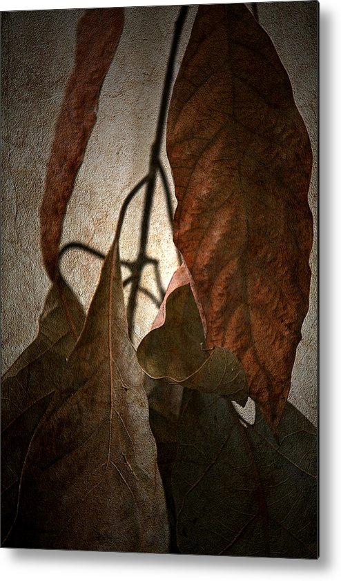 Autumn Metal Print featuring the photograph Comfort by Bonnie Bruno
