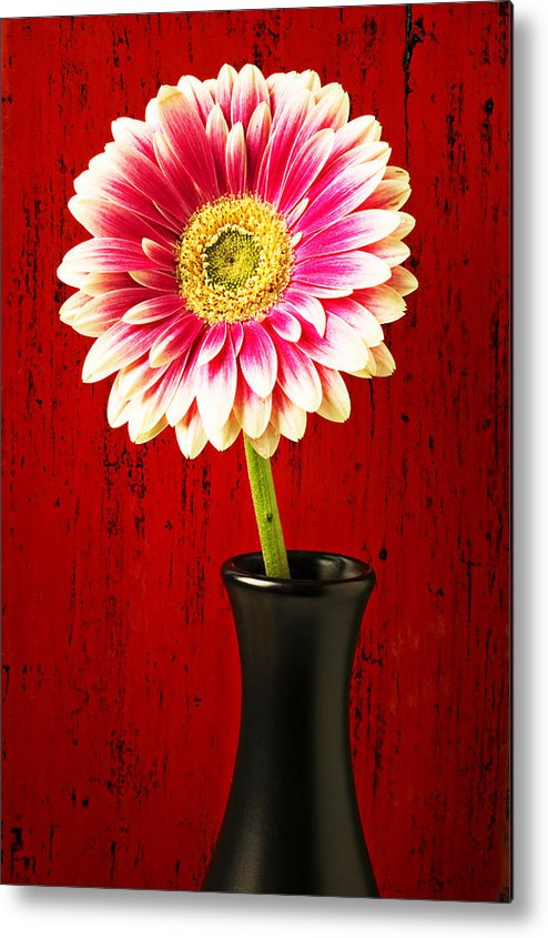 Flower Metal Print featuring the photograph Daisy In Black Vase by Garry Gay