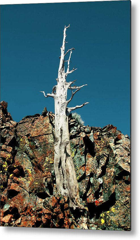 Desolation Wilderness Metal Print featuring the photograph Desolation Wilderness Tree 2 by Noah Brooks