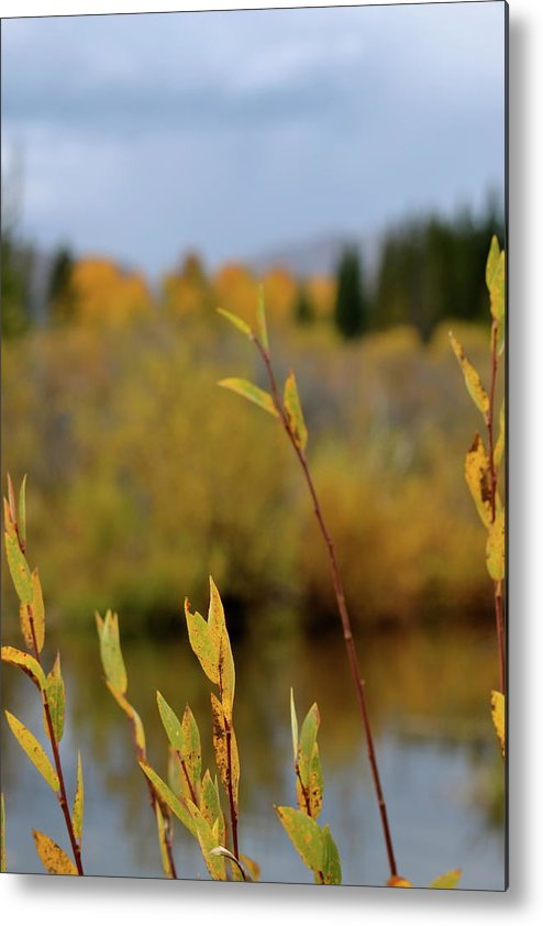 Autumn Metal Print featuring the photograph By The River by Beverley Harper Tinsley