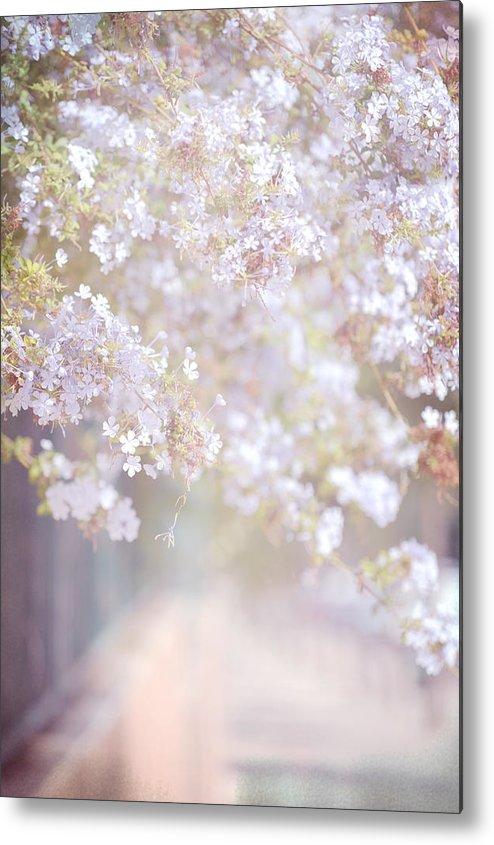 Jenny Rainbow Fine Art Photography Metal Print featuring the photograph Dreaming Of Spring by Jenny Rainbow