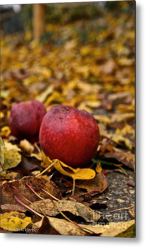 Outdoors Metal Print featuring the photograph Fallen Fruit by Susan Herber