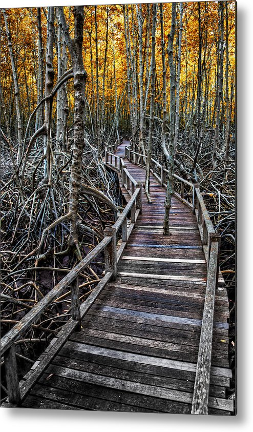 Area Metal Print featuring the photograph Footpath In Mangrove Forest by Adrian Evans
