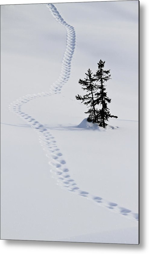 Vertical Metal Print featuring the photograph Footstep Trail On Snow by Gerhard Fitzthum