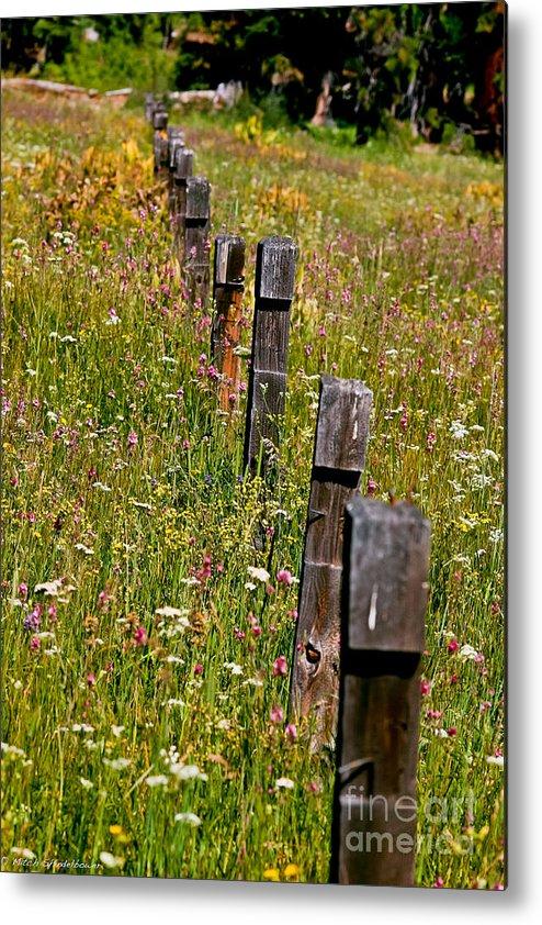 Fredricks Meadow Metal Print featuring the photograph Fredricks Meadow by Mitch Shindelbower