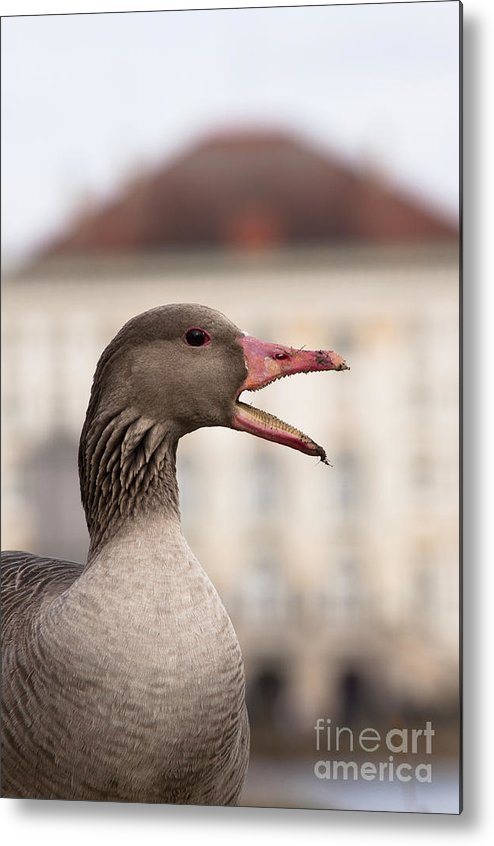 Bavaria Metal Print featuring the photograph Goose At Nymphenburg Palace by Andrew Michael