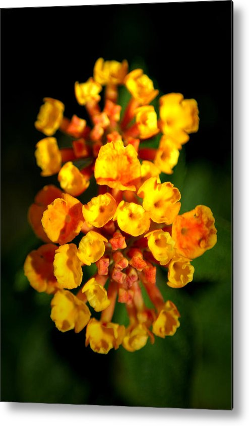 Flower Metal Print featuring the photograph Horn Section by David Weeks