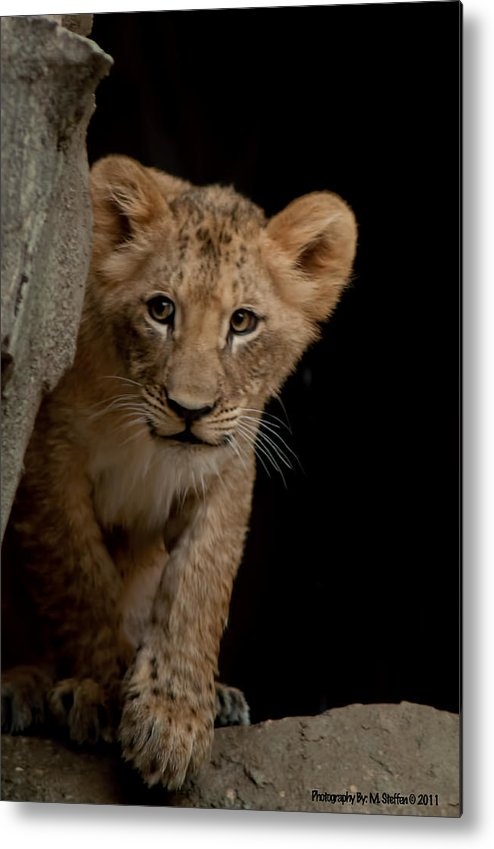 Wildlife Metal Print featuring the photograph I See You by Matt Steffen