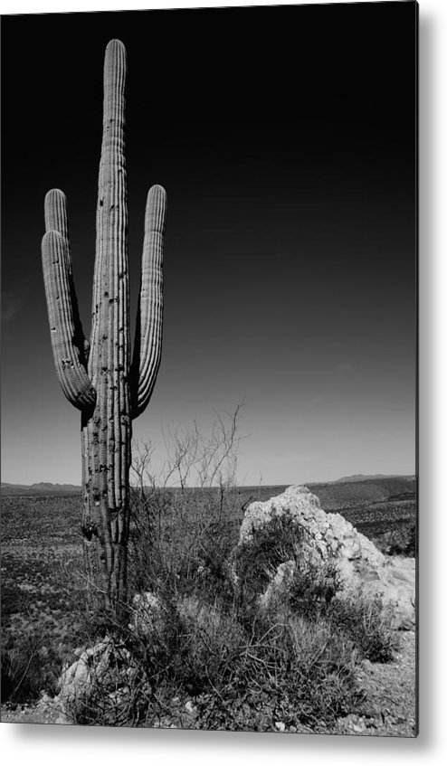 Lone Saguaro Metal Print featuring the photograph Lone Saguaro by Chad Dutson