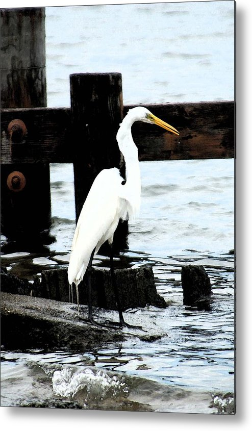 Egret Metal Print featuring the photograph Louisiana Egret by Victoria Leyva