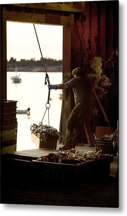 Maine Metal Print featuring the photograph Mornings Work by Don Powers