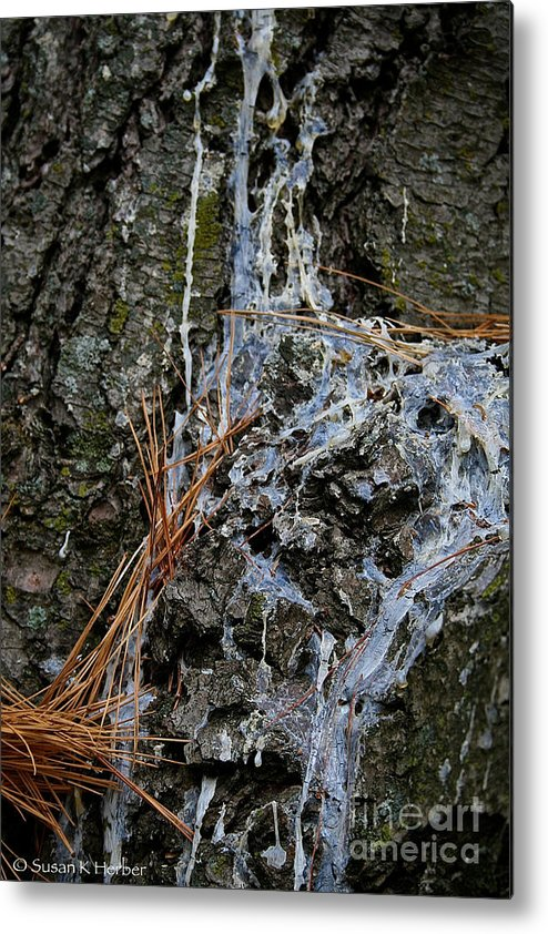 Outdoors Metal Print featuring the photograph Old Needles And Sap by Susan Herber