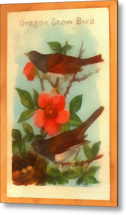Vintage Metal Print featuring the drawing Oregon Snow Bird Trading Card by Anne Kitzman