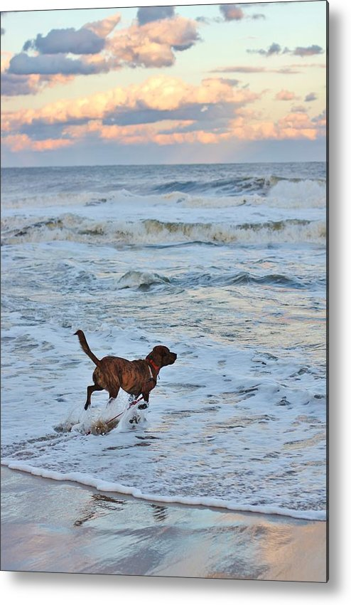 Dog Metal Print featuring the photograph Peanut Faces The Waves by Natalie Markova