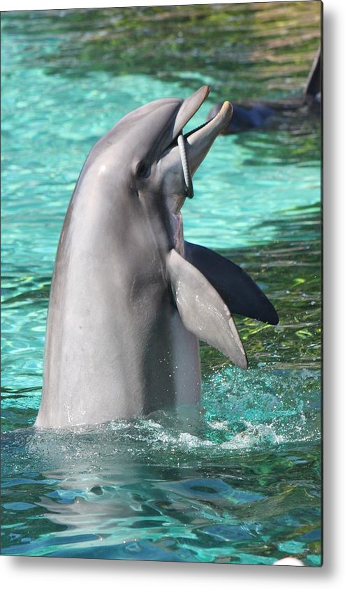 Dolphin Metal Print featuring the photograph Performing Dolphin by Natalie Markova