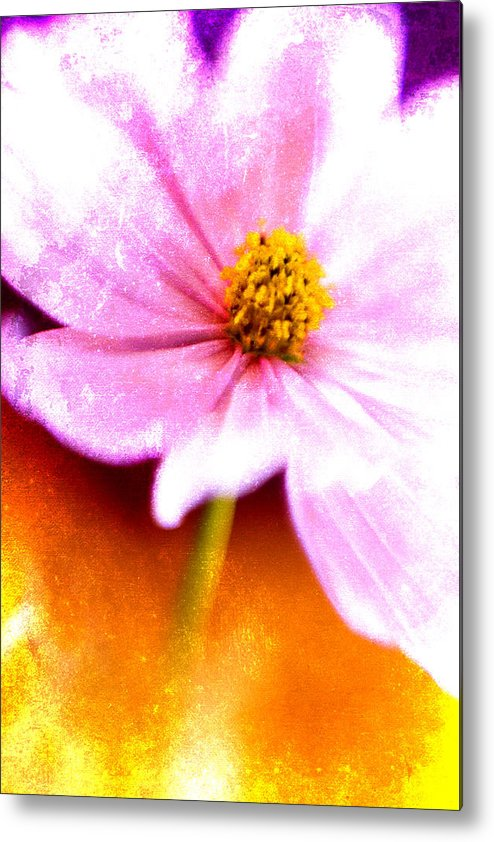 Flower Metal Print featuring the photograph Pink Cosmos On Orange by Carol Leigh