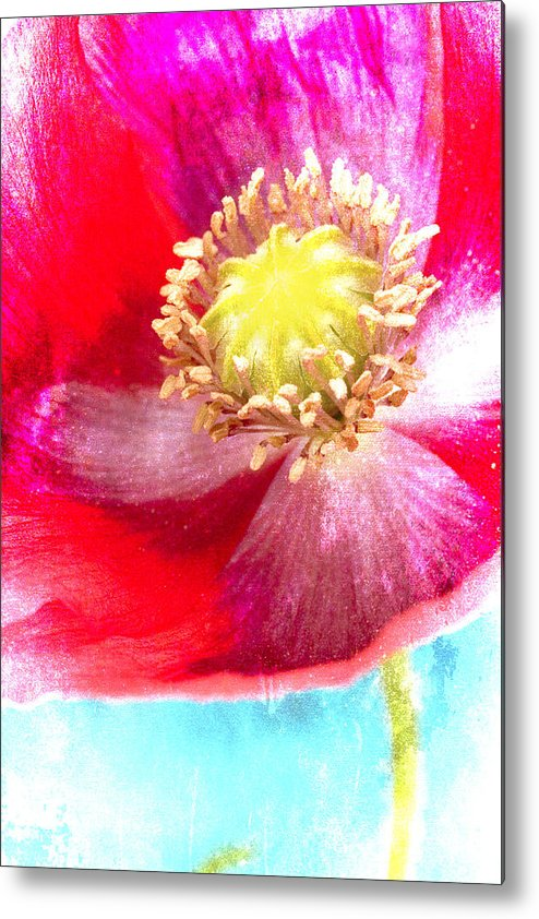 Poppy Metal Print featuring the photograph Red Poppy On Blue by Carol Leigh