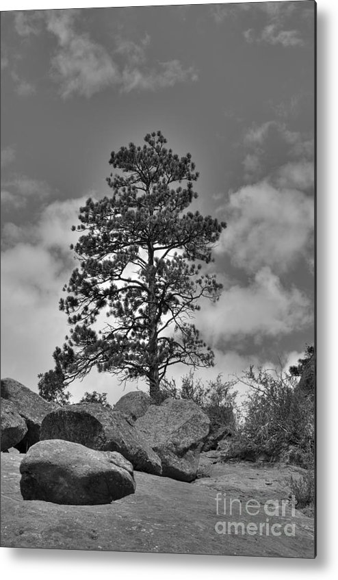 Red Rock Ampitheater Metal Print featuring the photograph Red Rock Pine by David Bearden