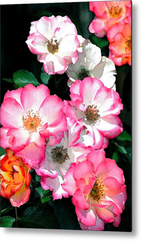 Floral Metal Print featuring the photograph Rose 133 by Pamela Cooper