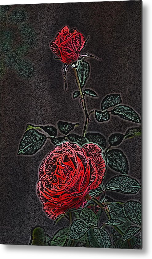 Flower Metal Print featuring the photograph Rose 85 by Pamela Cooper