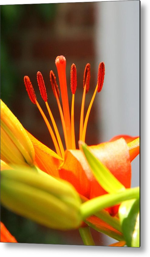 Stamen Metal Print featuring the photograph Round Up by Phil Cappiali Jr