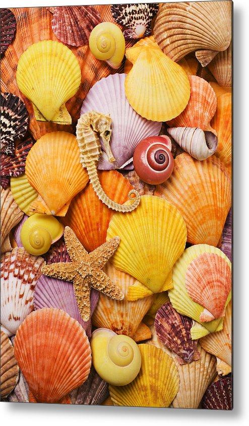 Sea Shells Starfish Metal Print featuring the photograph Sea Horse Starfish And Seashells by Garry Gay