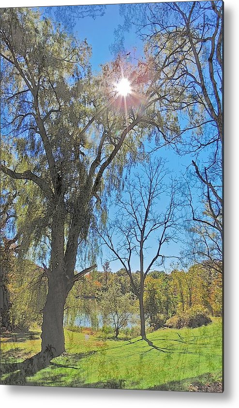 Tree Metal Print featuring the photograph Sun And Trees - 4 by Larry Mulvehill