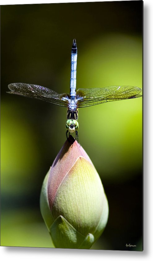 Insects Metal Print featuring the photograph T Shape by Lisa Spencer