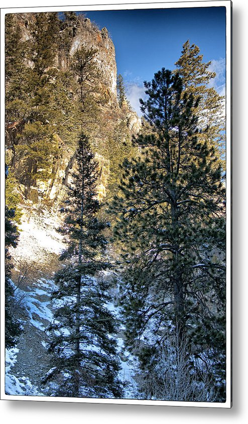 Mountain Metal Print featuring the photograph Tall Trees by Lisa Spencer