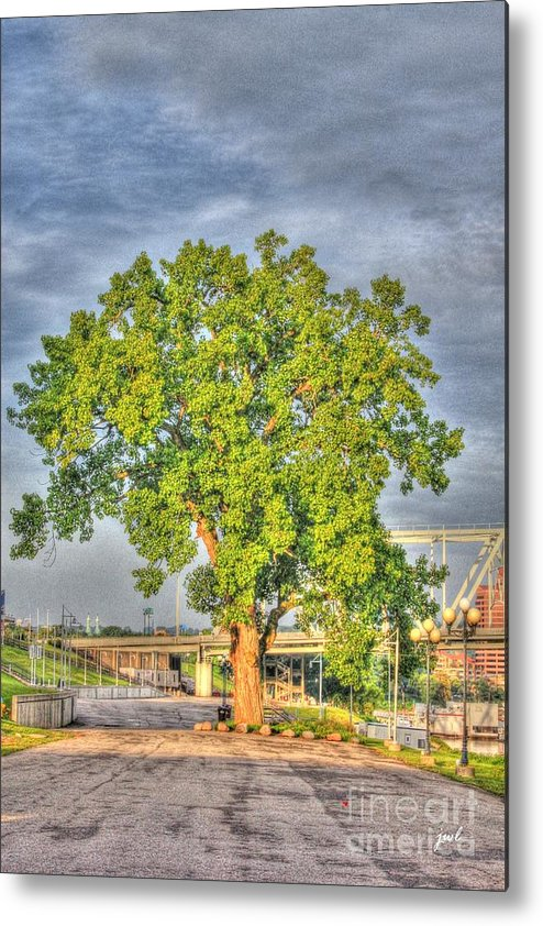 Tree Metal Print featuring the photograph Tree At Newport On The Levee by Jeremy Lankford