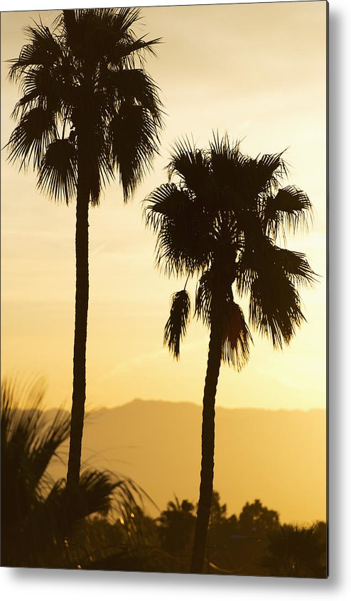 Vertical Metal Print featuring the photograph Usa, California, Palm Springs, Palm Trees Silhouetted At Sunset by Tetra Images