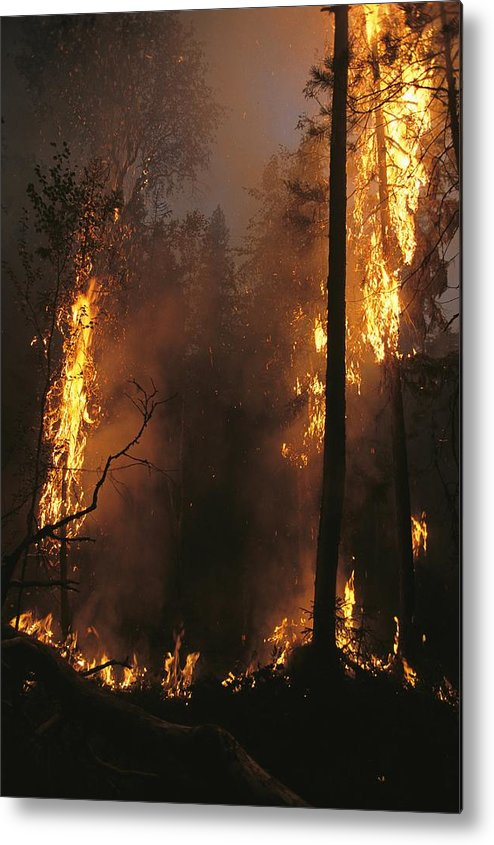 Fires Metal Print featuring the photograph When Flames Crown Into Treetops by Mark Thiessen