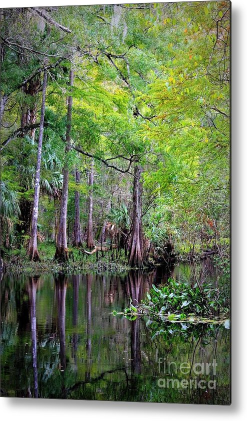 Cypress Trees Metal Print featuring the photograph Wild Florida - Hillsborough River by Carol Groenen