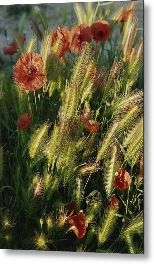 Europe Metal Print featuring the photograph Wildflowers And Grass Tufts In Provence by Nicole Duplaix