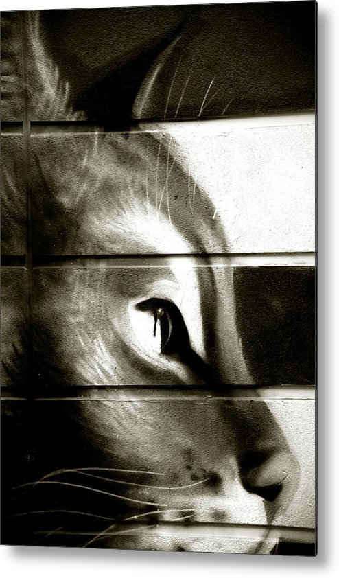 Metal Print featuring the photograph With My Steely Eyes by Jez C Self