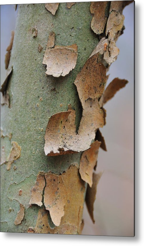 Tree Metal Print featuring the photograph Bark by David Arment