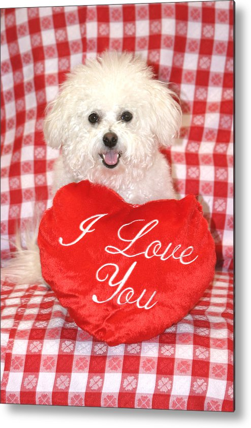 Animal Metal Print featuring the photograph Fifi Loves You by Michael Ledray