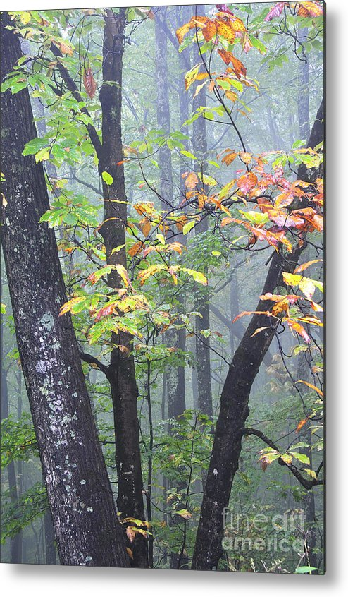 Foggy Metal Print featuring the photograph Foggy Fall Forest by Thomas R Fletcher