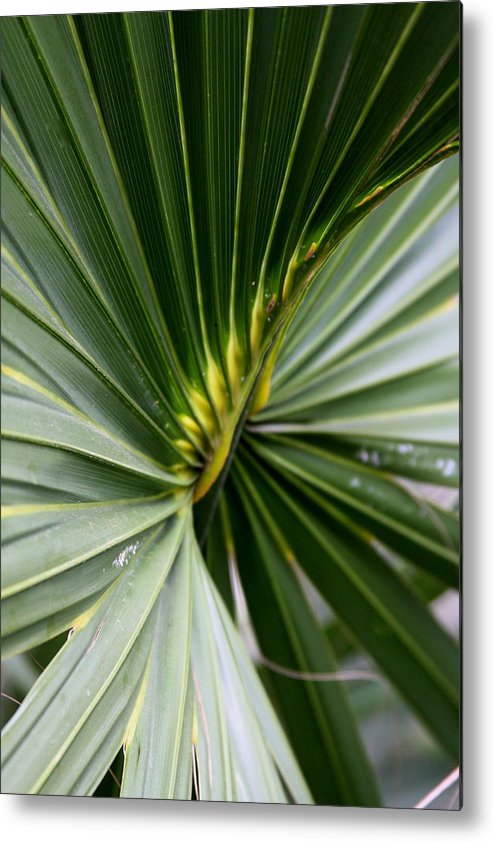 Fern Metal Print featuring the photograph Green Fan by Kenna Westerman