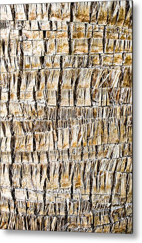 Abstract Metal Print featuring the photograph Palm Trunk by Tom Gowanlock