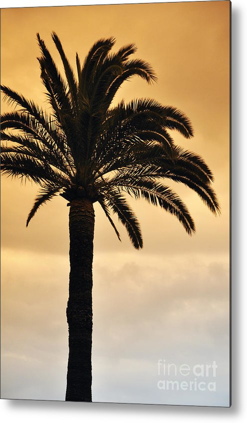 Palm Metal Print featuring the photograph Sunrise And Sunset by LS Photography