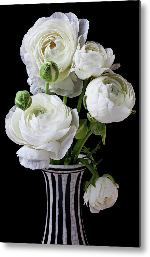 White Ranunculus Flower Vase Floral Metal Print featuring the photograph White Ranunculus In Black And White Vase by Garry Gay