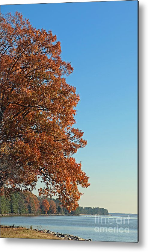 Tree Metal Print featuring the photograph 170 by Bryrrose Photography