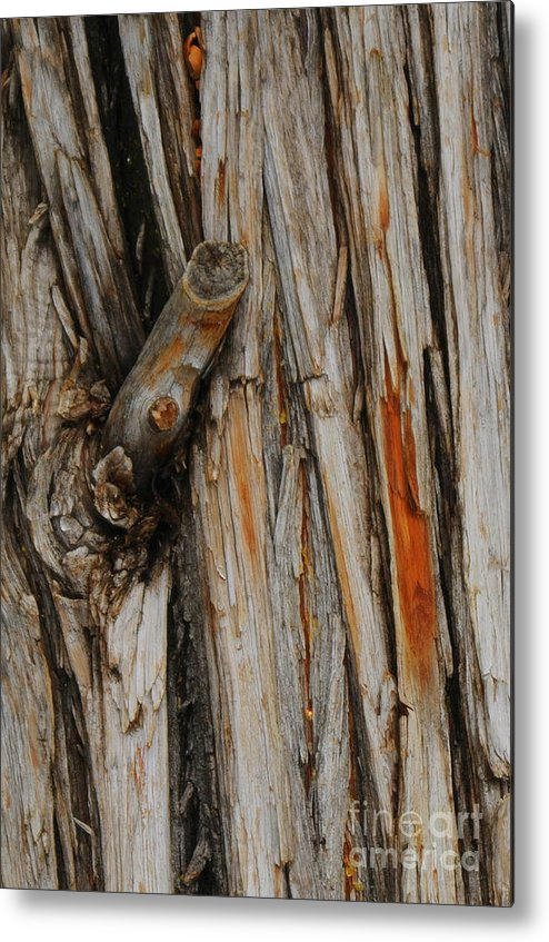 Bark Metal Print featuring the photograph Bark by Patrick Short