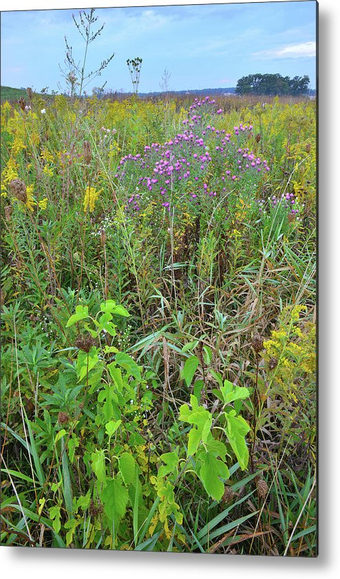 Glacial Park Metal Print featuring the photograph Glacial Park Native Prairie by Ray Mathis