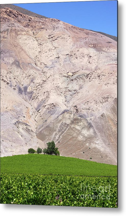 Chile Metal Print featuring the photograph Vines In The Atacama Desert Chile by James Brunker